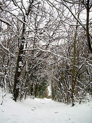 neige sur les bois
