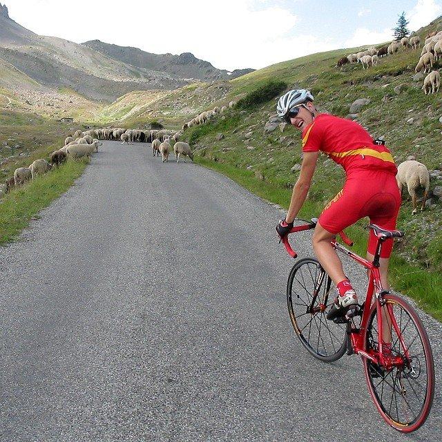 Moutons sur la route du granon